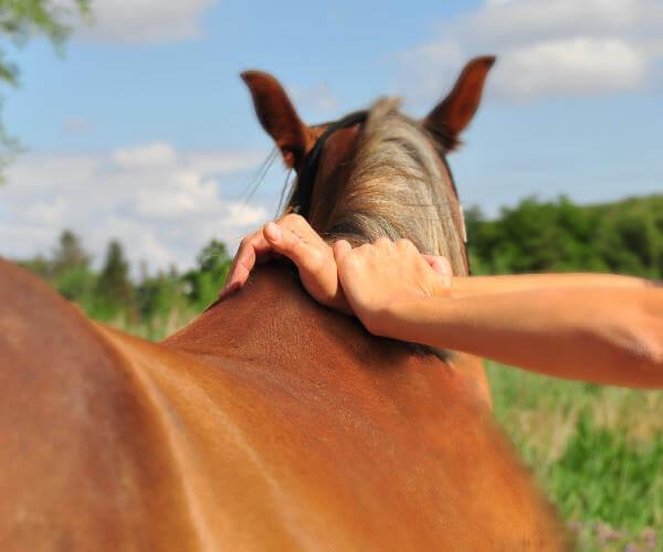 Alternative Tiermedizin: Chiropraktik beim Pferd in der Tierarztpraxis Fischer; foto: Karl Jeller
